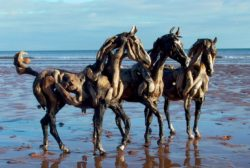 We have magic driftwood horses