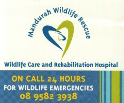 Wildlife Rescue and Care is a local interest