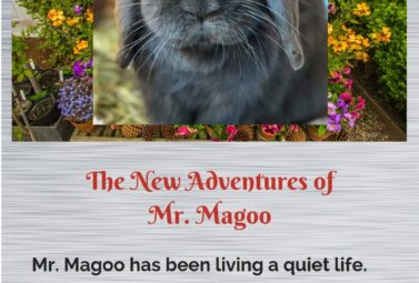 Mr Magoo the blind rabbit has a new adventure