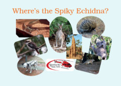 There are lots of other animals besides the Spiky Echidna