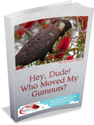 Hey Dude! Who Moved My Gumnuts? - a story about seeds and how they work.