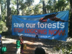 It was community action which saved over 200 hectares of valuable forest in the South West of WA.