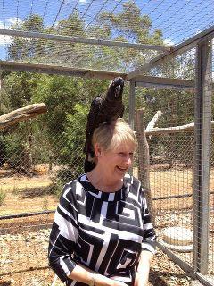 Nana Lesley Dewar writes about black cockatoos for her grandchildren