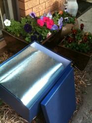 Sasha's burial box